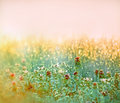 Early morning dew on the lawn in meadoe Royalty Free Stock Photography