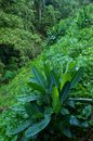 Early morning green jungle valley view Royalty Free Stock Images