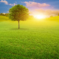 Early morning on the green summer meadow natural landscape Stock Images