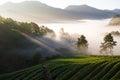 Early morning at strawberries field at doi ang khang chiangmai thailand Stock Photo