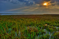 Early Morning Sun Over Coastal Marsh Royalty Free Stock Photo
