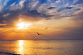 Early morning sunrise over sea birds Stock Photo