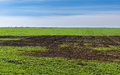 Early spring landscape with winter crop field Stock Images