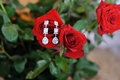 Earrings on Red Rose Stock Image