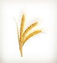 Ears of wheat computer illustration on white background Stock Photo