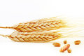 Ears of wheat with grain and fresh bread Royalty Free Stock Photo