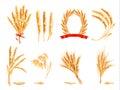 Ears of wheat, oat, rye and barley.