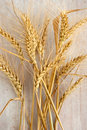 Ears of wheat yellow on the white wood board Royalty Free Stock Images