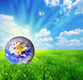 Earth globe on green grass Royalty Free Stock Images