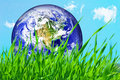 Earth globe in green grass Stock Photography