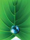 Earth globe illustration in the leaf Stock Image