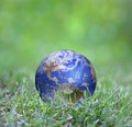Earth in green globe laying the grass Stock Image