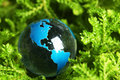 Earth marble in plant Royalty Free Stock Photo