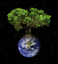 Earth tree Royalty Free Stock Images