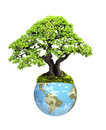 Earth and tree isolated on white background elements of this image furnished by nasa Royalty Free Stock Image