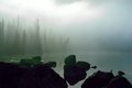 Earthly still mist shrouds the wetland and all life is absent save the trees Stock Image