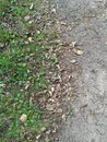 Earthy ground covered in a combination of stone leaves and grass all natural covering Royalty Free Stock Photo
