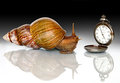 East African snail and clock Stock Photography