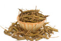 East indian screw tree dry herb Royalty Free Stock Photo