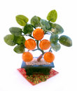East souvenir tangerine tree Royalty Free Stock Image