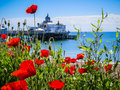 Eastbourne's pier and poppies Royalty Free Stock Photo