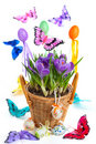 Easter arrangement with crocus Royalty Free Stock Photos