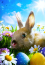 Easter baby rabbit easter eggs Royalty Free Stock Photos