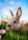 Easter Baby rabbit on green grass Stock Photos