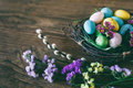 Easter background. Bright colorful eggs in nest with spring flowers over wooden dark background. Selective focus with