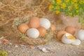 Easter background chicken eggs