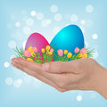 Easter background female hand holding colored eggs and tulips on blue bokeh Stock Photography