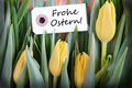 Easter background with label the german words frohe ostern which means happy Royalty Free Stock Images