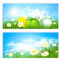 Easter banners with green grass and eggs on a white background Royalty Free Stock Images
