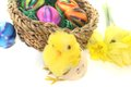 Easter basket with chick and colorful eggs on a light background Royalty Free Stock Photo
