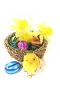 Easter basket with chick daffodils and colorful eggs on a light background Stock Photos