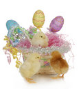 Easter basket and chicks Royalty Free Stock Photo