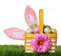 Easter basket with colorful eggs and bunny ears on green grass i