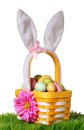 Easter basket with colorful eggs and bunny ears on green grass
