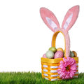 Easter basket with colorful eggs and bunny ears on green grass isolated on white Stock Images