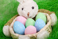 Easter basket with decorated eggs and the bunny Royalty Free Stock Photography