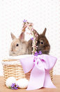 Easter bunnies in a basket Royalty Free Stock Photos