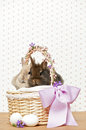 Easter bunnies in a basket Royalty Free Stock Photography