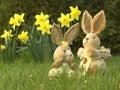 Easter bunny 03 Stock Photos