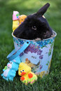 Easter bunny basket black lop eared sitting in an with candy Stock Image