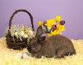 Easter bunny and basket fluffy with flowers Royalty Free Stock Photo