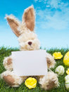 Easter Bunny with Card Royalty Free Stock Photos