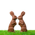 Easter bunny couple two chocolate bunnies in love isolated on white Royalty Free Stock Images