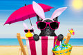 Easter bunny dog at the beach Royalty Free Stock Photo