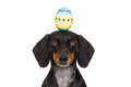 Easter bunny dog with egg Royalty Free Stock Photo