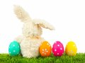 Easter bunny with eggs over white Stock Photography
